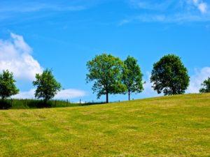 Landschaftspanorama, Bäume am Horzont, blauer Himmel, wolkenlos