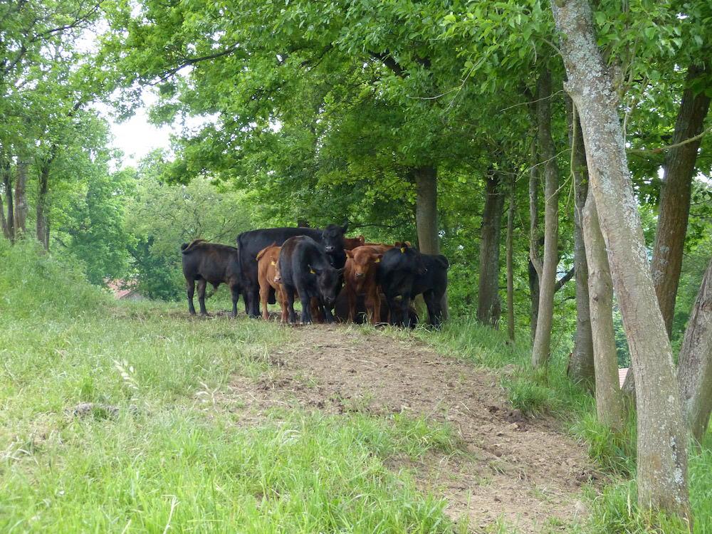gruenland-spessart-erzeuger-familie-staab