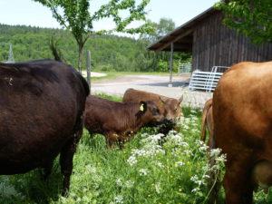 gruenland-spessart-erzeuger-guido-steinel