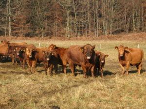 gruenland-spessart-erzeuger-harald-orth