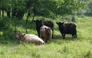 gruenland-spessart-erzeuger-henning-reußing