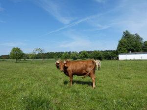gruenland-spessart-erzeuger-johannes-becker