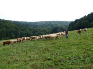 gruenland-spessart-erzeuger-sebastian-heeg