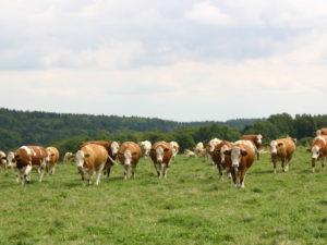 gruenland-spessart-erzeuger-stefan-koehler